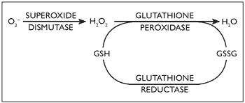 Figure 1. Glutathione peroxidase (GPX) role in oxidative stress and its interaction with superoxide dismutase (SOD).